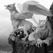 Griffon Nest